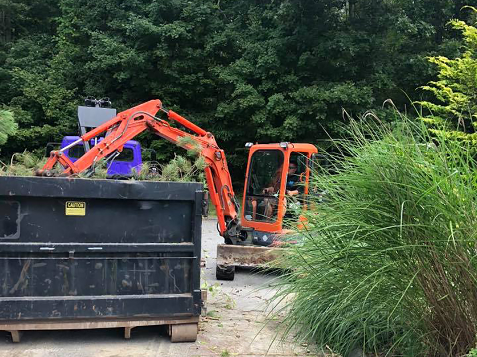 ct shoreline landscaping brush removal