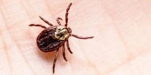 tick control tick prevention spray ct