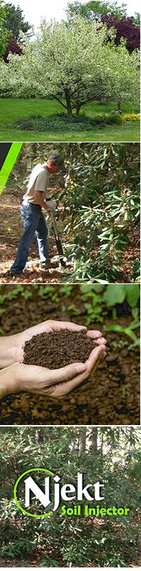 Njekt tree fertilization