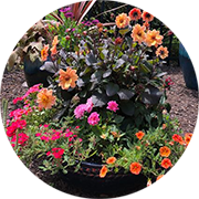 tips for watering container gardens from TNT Landscaping & Excavation