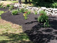 Technicolor Plant Installation by TNT Landscaping & Excavation